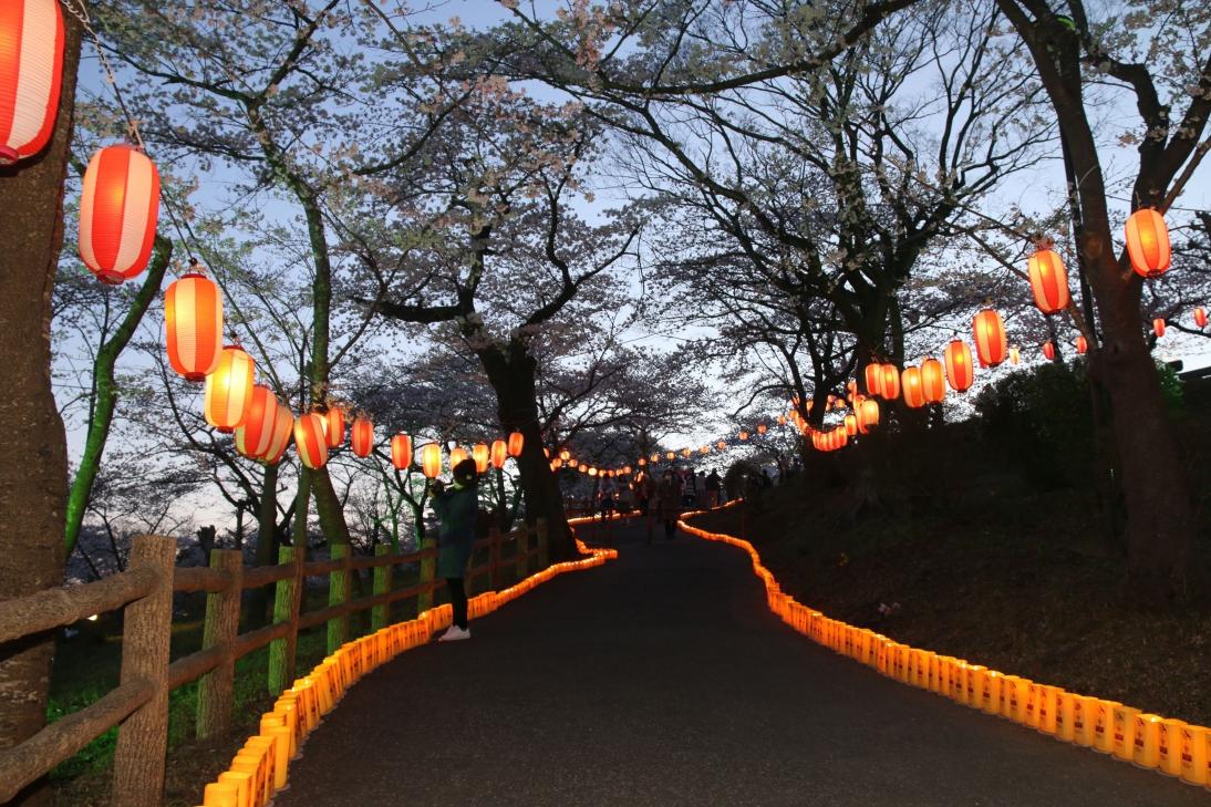 夜ノ森公園桜祭り
